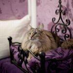 庶民より豪華な暮らし…!世界初「猫専用」の5つ星ホテルが豪華すぎてツライw