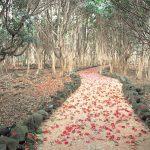 おとぎの国へと続いていそうな「真っ赤な椿の道」。神秘的な雰囲気がステキすぎる