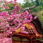 花開く梅の中を歩きたい♪九州の観梅の名所まとめ【2016年版】