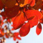 藪塚温泉で季節の料理を楽しもう!おすすめ宿・旅館10選