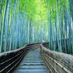 """日本は沖縄と京都がトップ10入り!Airbnbが世界中の""""お気にいり""""登録された旅行先とお家を発表!"""