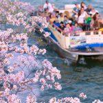自分史上最高のお花見体験!360度桜に囲まれる「クルージング花見」まとめ