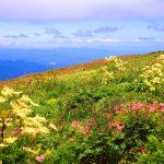 軽くハイキング気分が味わえて高山植物が手軽に楽しめるスポットを紹介!