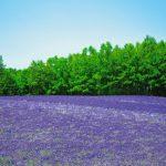 富良野のラベンダー畑といえばここ!ファーム富田の花畑が絶景すぎる!