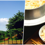 【東京で田舎体験・6.7月限定】フレッシュな季節野菜を収穫!日帰り農業体験まとめ9選!