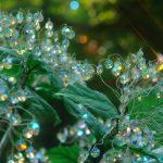 まるで宝石の花畑!箱根に咲く「ガラスのあじさい」がキラキラで美しすぎる