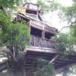 なにこれ!?木の上に作られた『なんじゃもんじゃカフェ』が不思議すぎる【横浜】