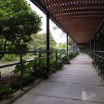 牧野植物園でのんびり過ごそう!1年中緑溢れる高知の癒し空間♪