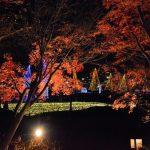 広大なグランドイルミネーションが見れる!木曽三川公園「冬の光物語」が開催