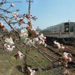 岐阜県の桜の名所を巡ろう!絶景スポット満載!