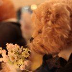 伊豆テディベア・ミュージアムで愛らしいクマさんたちに癒されましょう♪