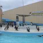 志摩マリンランドが楽しい!ペンギンや海の生き物と身近に触れ合おう♪