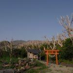 三宅島に行ったら行きたいおすすめグルメスポットまとめ7選
