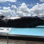 台湾の国立博物館!国立海洋生物博物館で海を知る
