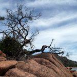タスマニア観光スポットまとめ オーストラリアの神秘パワーを感じに行こう!