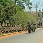 象に乗って散策!カンボジアで体験できる象乗りについて