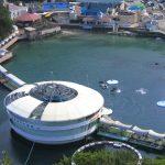下田海中水族館がステキ。キュートなイルカたちに胸キュンしちゃおう!
