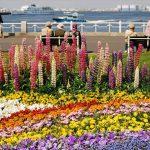 ロマンチックな公園!港ヨコハマにある山下公園の魅力♪