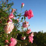 春の主役はやっぱり『花』関西地方の花の名所5選