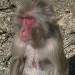 なんだか人間よりも関係複雑!?銚子渓お猿の国で1日お猿を眺めてみませんか?
