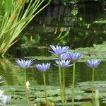 何かと忙しい春は癒しが必要です♪四国地方の花の名所をまとめてみました!