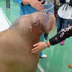 腹ごしらえしてから水族館を楽しみたい!三重県にある二見シーパラダイス周辺のおすすめランチスポット