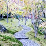 箱根美術館は魅力がいっぱい!本当は知られたくない秘密の紅葉スポット!