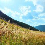 美しい草原!箱根にある「仙石原高原」で自然に触れる