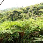 太古の森を散策!沖縄県にある「沖縄唯一ヘゴの原生林 やんばる憩いの森」で恐竜時代を再現