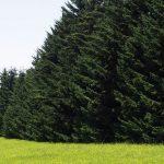 自然を思いっきり体験できる!『自然公園野幌森林公園』の魅力♪