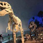 福井県恐竜博物館はどうやって行けばいい?アクセス方法をまとめてご紹介