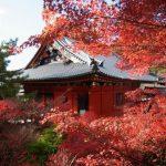 町並みを離れた京都・山科「毘沙門堂」で動く襖絵を堪能する♪