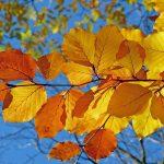伝統の祭りと爽やかな秋の自然を楽しみたい★岩手県のおすすめの9~10月開催の秋祭り5選