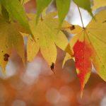 ねぶただけじゃない!秋も神楽、山車など鮮やかに!青森で9月開催のおすすめ秋祭り5選