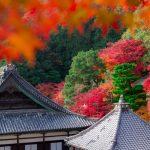 眼病に御利益のある観音様を祀る!京都にある「楊谷寺」について
