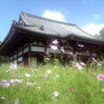 奈良の史跡とコスモスの風景を楽しみたい!奈良のコスモスの名所5選