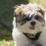 ペットと一緒に長崎へ癒され旅♪長崎の愛犬と一緒に泊まれるおすすめ宿5選