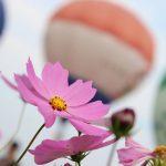 佐賀の四季の花と自然を感じられる名所♪宿泊もOK!どんぐり村を紹介します!