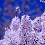 神戸七福神の長田神社へお参りしたい!恵比寿様のご利益が受けられる長田神社について紹介します!!