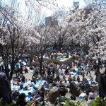 桜の名所「飛鳥山公園」へ行こう!飛鳥山公園までのアクセス方法のまとめ♪