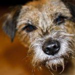 愛犬と山形に1泊♪大型犬も宿泊できる山形のおすすめ宿泊施設5選