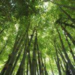 新東京百景に認定!東京の東久留米にある「竹林公園」について