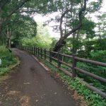 緑道を歩こう!東京にある「玉川上水緑道」について