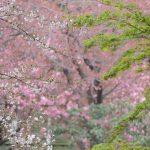おとめ山公園でほたる鑑賞。新宿なのに自然がいっぱい!