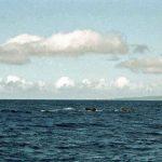 くじらの町 和歌山・那智勝浦でマッコウクジラに出会う!那智勝浦のホエールウォッチングについて紹介します!!