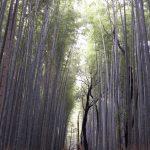 2015嵐山観光レポート!竹林から京友禅の夜景まで一挙に紹介します!