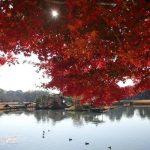 岡山の紅葉の名所はココ!静かな時の流れを感じられる岡山紅葉狩りの名所5選
