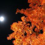 河口湖や山梨の紅葉の名所15選!