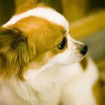 滋賀でワンちゃんも満喫のお泊り♪滋賀の愛犬と泊まれるおすすめ宿泊施設6選