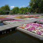 鳥取花回廊だけじゃない!鳥取の春  夏秋冬を彩る花の名所6選